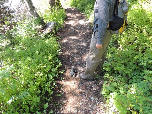 Does a bear poop in the woods? No! On the trail!