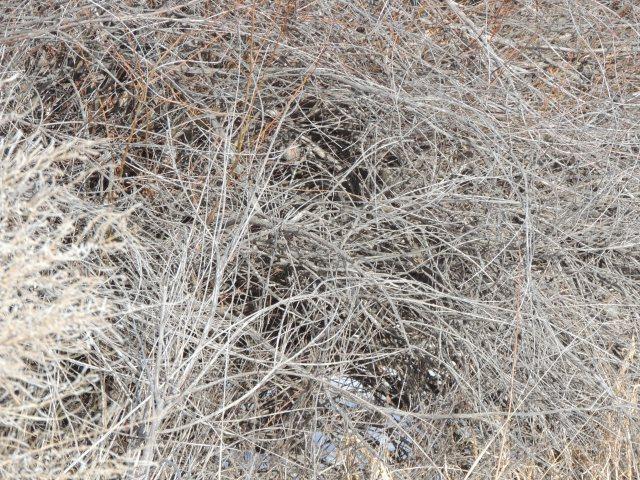 Birds in bushes 1